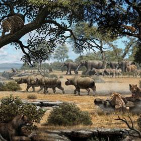 9 triệu năm trước chó gấu và mèo đã từng sống cùng nhau