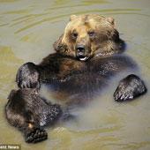 Ảnh đẹp: Gấu nằm ngửa trên ao đón nắng thu