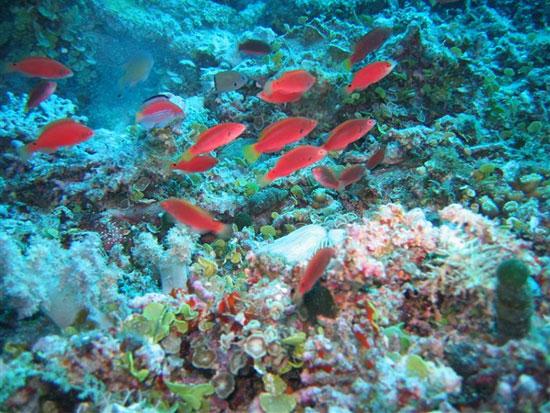 Nhiều loài sinh vật biển chưa được biết đến