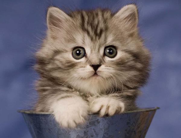 Vì sao mèo tìm được đường về nhà?