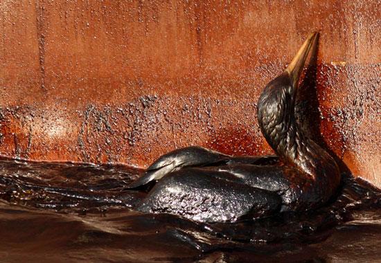 Những hậu quả ô nhiễm môi trường biển do tràn dầu