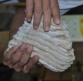 Đi tìm cổ vật, phát hiện răng voi hóa thạch