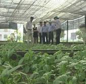 Ứng dụng khoa học công nghệ trong sản xuất hoa cúc