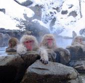 Giải mã sự to lớn của động vật xứ lạnh