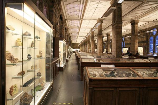 Bên trong Bảo tàng Lịch sử tự nhiên London. Tính trung bình, từ thời điểm một mẫu vật mới được phát hiện cho tới thời điểm nó được nhận diện và thông báo tới thế giới kéo dài tới 21 năm.
