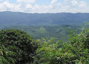 Các nhà nghiên cứu đã tìm thấy hợp chất trị ung thư ở loài cây Aglaia