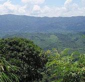 Phát hiện chất diệt tế bào ung thư ở một loại cây rừng