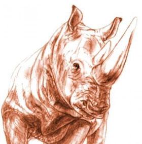 Tìm thấy hóa thạch sọ tê giác 9,2 triệu năm tuổi trong tro bụi núi lửa
