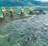 Nghiên cứu tác nhân gây nấm bệnh trên cá nước lạnh