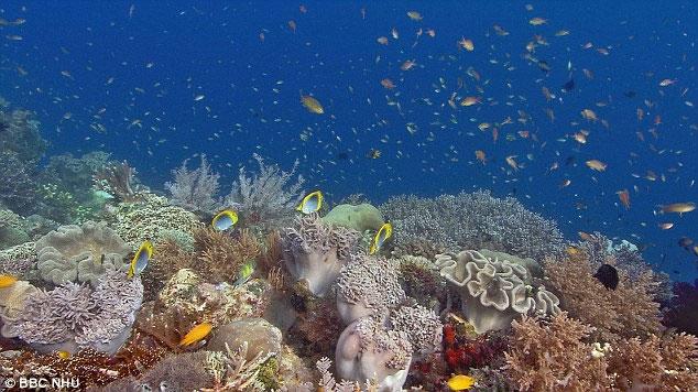 Động vật biển đang mất dần vỏ