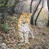 Ảnh đẹp động vật chụp bằng bẫy ảnh tự động