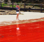 Thủy triều đỏ khiến các bãi biển Australia đóng cửa