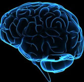 Con người mới chỉ sử dụng 1/10 trí thông minh?