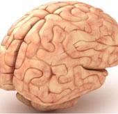 Chữa lành tổn thương não bằng vật liệu mới