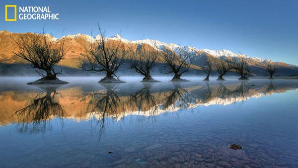 Hàng cây đều đổ bóng trên mặt hồ Wakatipu ở Glenorchy, New Zealand.