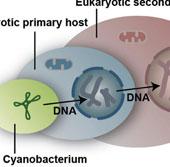 Phát hiện cơ chế để thực vật có 4 kiểu gene khác nhau