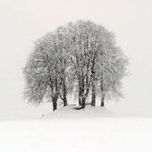 Chùm ảnh: Châu Âu chìm trong bão tuyết