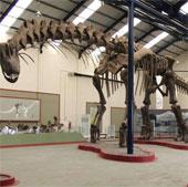 Tái tạo bước đi của khủng long sau 94 triệu năm