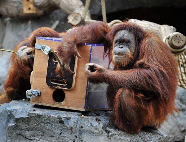 Chùm ảnh tuyệt đẹp về động vật