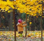 Sắc màu mùa thu khắp thế giới