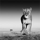 Hình ảnh tuyệt đẹp về động vật hoang dã