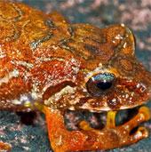 Nguyên nhân lấy tên sao Hollywood đình đám đặt cho... ếch