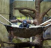 Những bức ảnh dấy lên tranh cãi về bảo tồn động vật