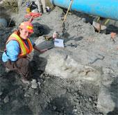 Liên tiếp phát hiện hóa thạch khủng long ở Canada