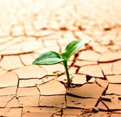 Sự sống trên Trái đất bắt nguồn từ... đất sét?