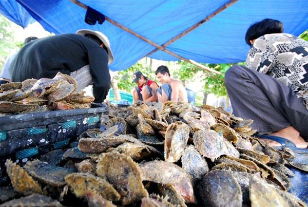 Cận cảnh nuôi trai lấy ngọc trên đảo Phú Quốc