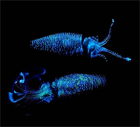 Bí ẩn sinh vật khiến biển đêm sáng lung linh