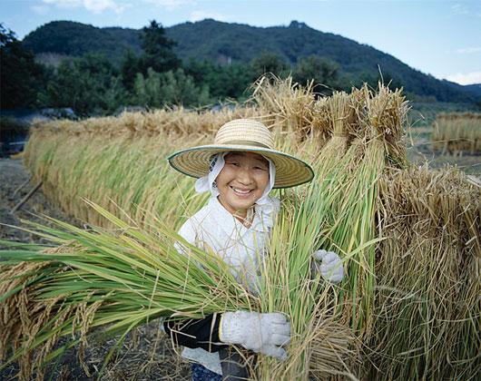 Phục hồi những cánh đồng chết ở Nhật Bản