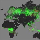 Ra mắt bản đồ thế giới đầu tiên về diện tích rừng Trái Đất