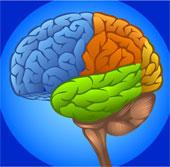 """Não bộ """"nhìn"""" được dù mắt không thấy"""