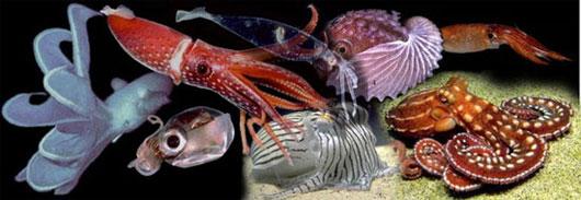 Da bạch tuộc và mực