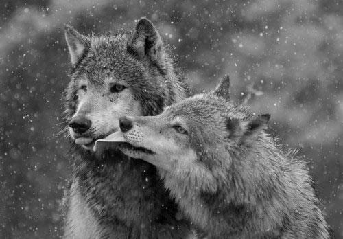 Cử chỉ yêu thương của động vật
