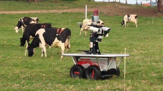 Robot chăn bò điệu nghệ giá triệu đô