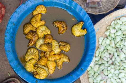 Sơn hào hải vị từ côn trùng