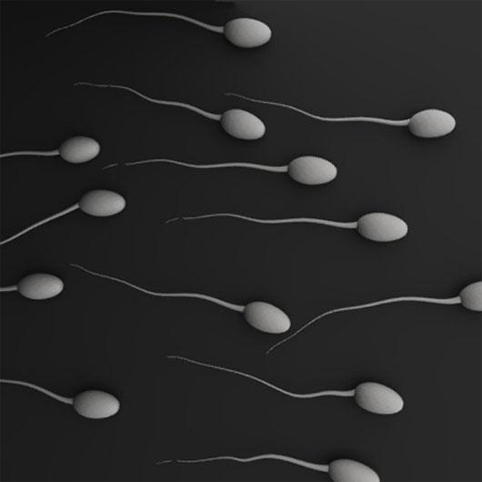 9 điều bạn chưa từng biết về tinh trùng