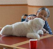 Nghiên cứu lợi ích của robot thú cưng trong điều trị mất trí nhớ