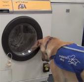 Máy giặt khởi động theo tiếng chó sủa