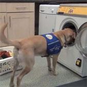 Video: Giới thiệu máy giặt khởi động theo tiếng chó sủa