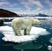 """Xem động vật """"tiên tri"""" tình trạng nguy cấp của Trái đất"""