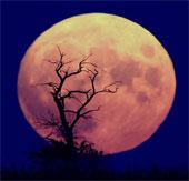 NASA sắp lập vườn rau trên mặt trăng