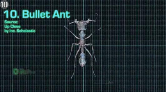 """10 côn trùng """"sát thủ"""" nguy hiểm nhất hành tinh"""