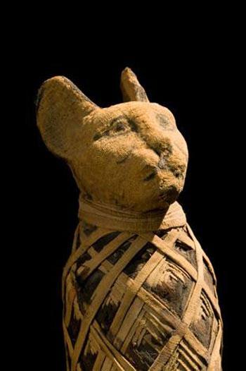 Xác ướp động vật gần 3.000 năm tuổi