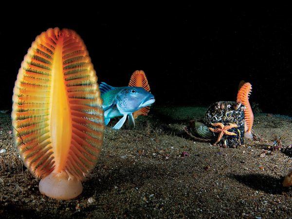 Cá, sao biển và bút biệt tạo thành một bức tranh sinh động dưới đáy biển ở ngoài khơi New Zealand