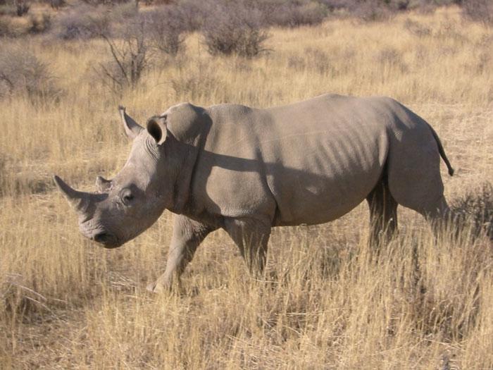 Công nghệ cao giúp giảm nạn săn tê giác trái phép