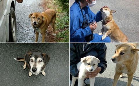 Nhật cứu động vật ở quanh nhà máy điện hạt nhân