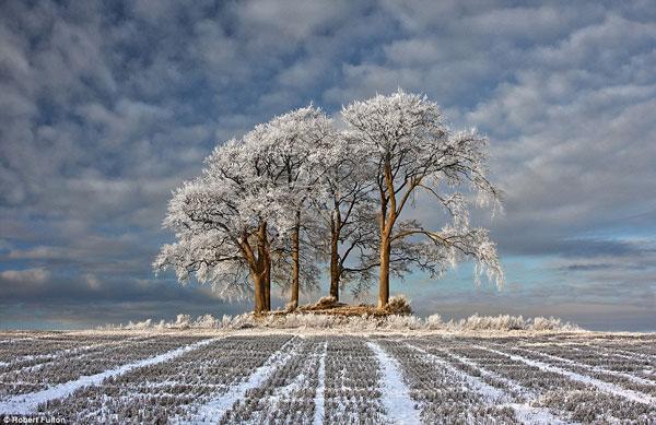 Sương giá phủ trắng cây cối trong mùa đông tại Stirlingshire, Scotland